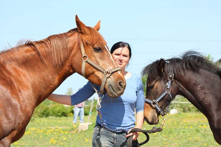 Horse riding tours in the Rila mountains